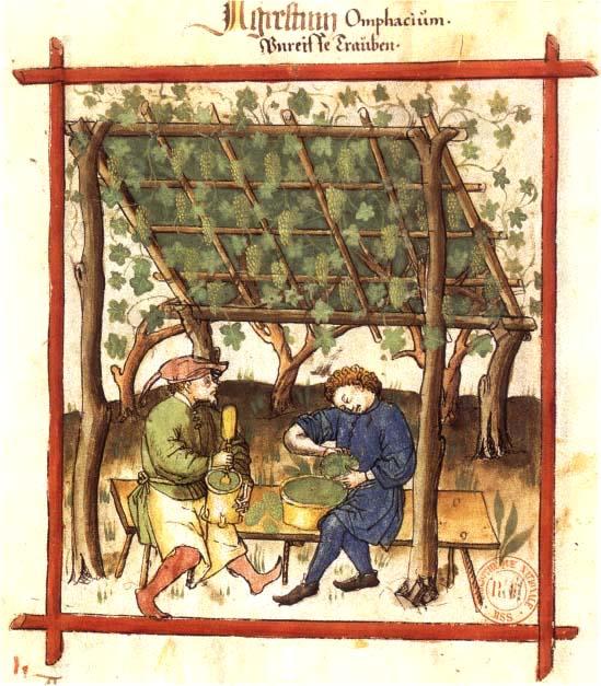 Grünernte von Weintrauben. Aus dem Handbuch der Familie Corutti in Verona um 1375Fabrication_du_verjus_BnF_Latin_9333_fol._83