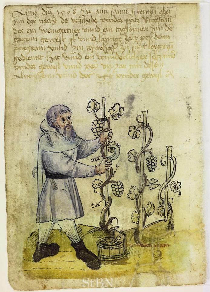 Mendel_I_126_v_Winzer tending to the grapevine (1508)
