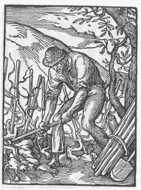 Rebmann-1568 The Rebmann from Jost Amman's Ständerbuch (1568)
